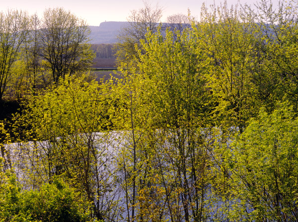 Spring Trees Along the Walkill River [1099]