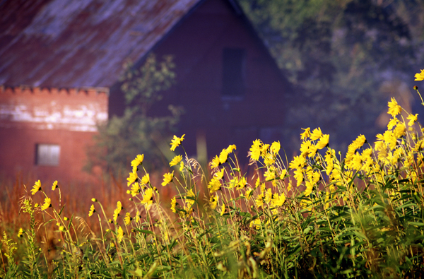 Clove Barn & Flowers [136]