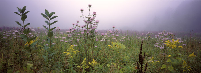 Morning Meadow Panoramic [2055]
