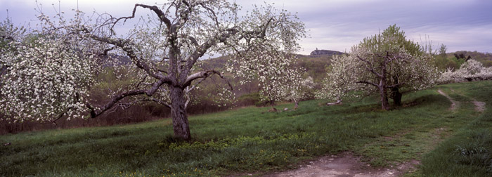 Spring Orchard, Skytop [2132]