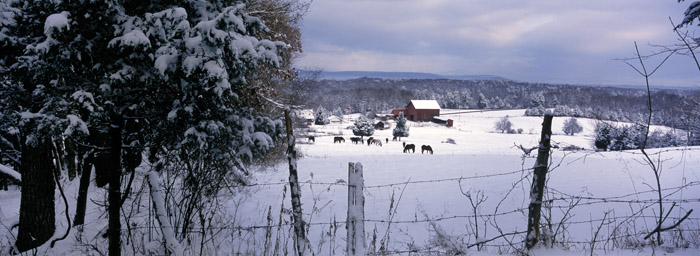 Winter Scene, Chapel Farm [2226]