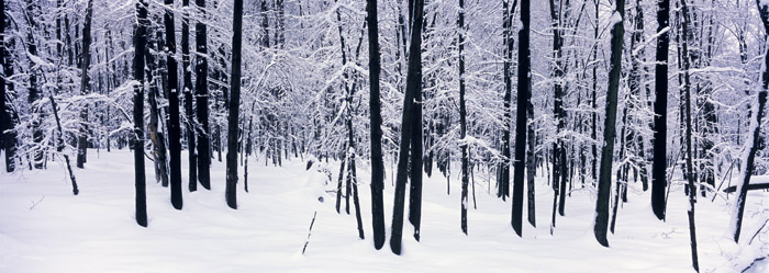 Winter Forest [2233]