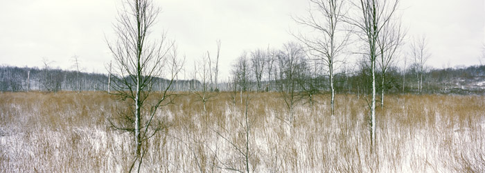 Winter, Humpo Marsh [2238]