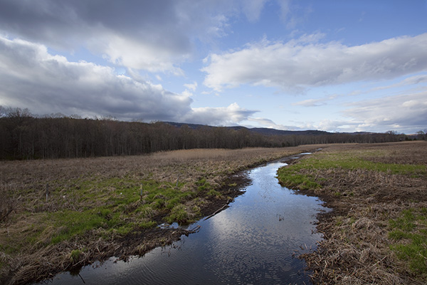 Early Spring, Humpo Marsh [3085]